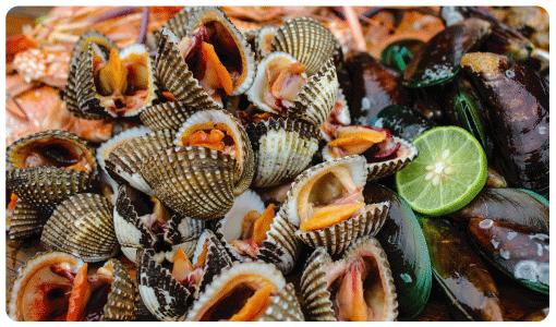 หอยแครงจักรพรรดิ์